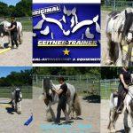 MH Horsemanship – Mobiler Unterricht Blau/Gelb