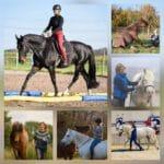 Pferdetraining Stuttgart