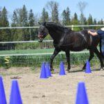 Pferdeosteopathie Ronja Martin