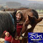 Training für große und kleine, junge und alte Pferde
