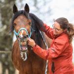 Tierphysiotherapie Monika Goldmann