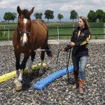.Rentner-Pferd Louiss ist dank Equikinetic und DA top fit!!!