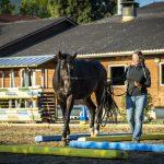Pferdetraining Astrid
