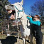Tierheilpraxis & Pferdetraining