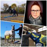 3K Pferdetraining