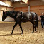 Pferdeausbildung am Boden