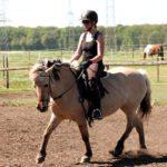 Training für Pferd und Mensch