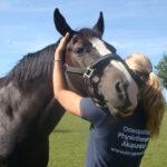 Pferde-und Hundeosteopathie Kim Gartmann
