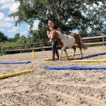 eQui-GAmPO – Ganzheitliches Arbeiten mit Pferden Ostfriesland