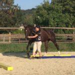 KL Pferdetraining