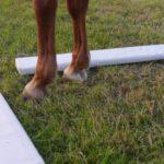 Manus Pferdetraining