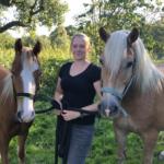 Pferdezeit Siemers