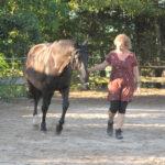 Mit Arbeit, Spaß und Spiel zum gesunden Pferd