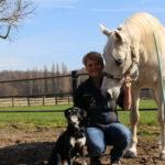 Ganzheitliche Osteopathie für Pferd & Hund
