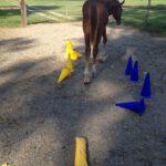 pferde-ausbildung.ch