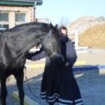 Gesundheitszentrum für Pferde