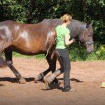 Pferdetraining Rhön
