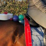 Horses in Balance