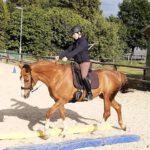 Pferdetraining Inselberger