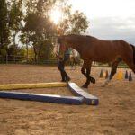 Horsemotion – Carola Gaunersdorfer